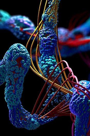 IUL Biotechnology Series
